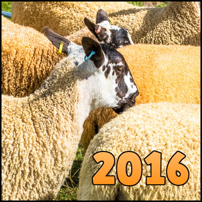 Photo of sheep in a pen, overlaid with the word '2016'